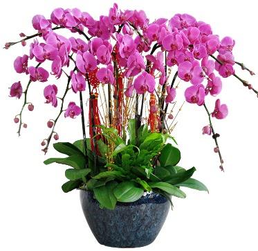 9 dallı mor orkide  Kütahya çiçekçi telefonları