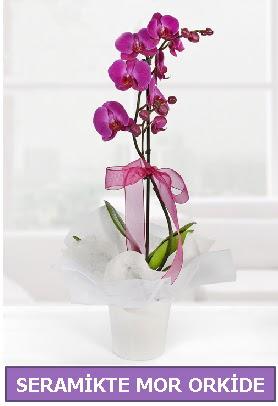 Seramik içerisinde birinci kalite tek dallı mor orkide  Kütahya online çiçek gönderme sipariş