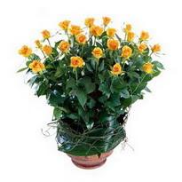 Kütahya çiçek yolla  10 adet sari gül tanzim cam yada mika vazoda çiçek
