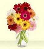 Kütahya çiçek siparişi vermek  cam yada mika vazoda 15 özel gerbera
