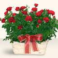 Kütahya online çiçek gönderme sipariş  11 adet kirmizi gül sepette
