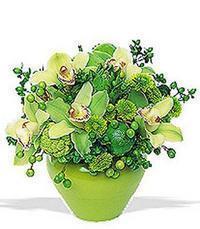 cam yada mika vazoda 5 adet orkide   Kütahya internetten çiçek siparişi