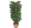 Kütahya kaliteli taze ve ucuz çiçekler  Özel Mango 1,75 cm yüksekliginde