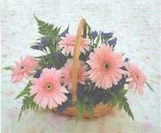 gerbera çiçeklerinde sepet   Kütahya cicekciler , cicek siparisi