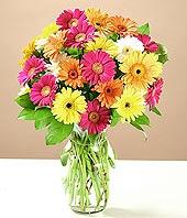 Kütahya ucuz çiçek gönder  17 adet karisik gerbera