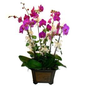 Kütahya çiçek gönderme sitemiz güvenlidir  4 adet orkide çiçegi