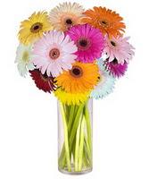 Kütahya online çiçekçi , çiçek siparişi  Farkli renklerde 15 adet gerbera çiçegi