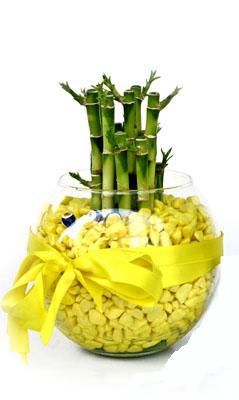 cam fanus içerisinde bambo  Kütahya güvenli kaliteli hızlı çiçek