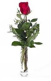 Vazo içerisinde 1 adet kirmizi gül  Kütahya çiçek yolla
