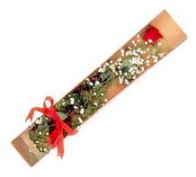 1 adet kirmizi gül  Kütahya 14 şubat sevgililer günü çiçek