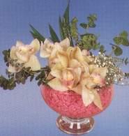 Kütahya çiçekçi mağazası  Dal orkide kalite bir hediye