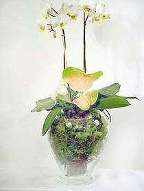 Kütahya anneler günü çiçek yolla  Cam yada mika vazoda özel orkideler