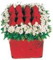 Kütahya uluslararası çiçek gönderme  Kare cam yada mika içinde kirmizi güller - anneler günü seçimi özel çiçek
