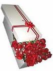 Kütahya 14 şubat sevgililer günü çiçek  11 adet 1.kalite magnum güller