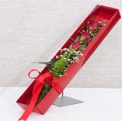 Kutu içerisinde 3 adet kırmızı gül  Kütahya İnternetten çiçek siparişi