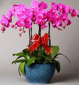 7 dallı mor orkide  Kütahya ucuz çiçek gönder