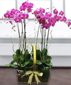 4 dallı mor orkide  Kütahya internetten çiçek satışı