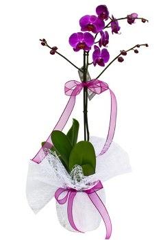 Tek dallı mor orkide  Kütahya 14 şubat sevgililer günü çiçek