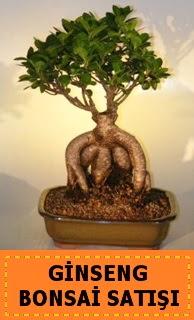 Ginseng bonsai satışı japon ağacı  Kütahya çiçek gönderme sitemiz güvenlidir