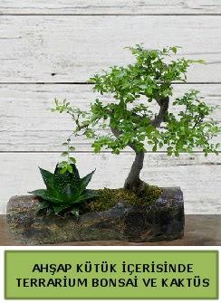 Ahşap kütük bonsai kaktüs teraryum  Kütahya online çiçekçi , çiçek siparişi