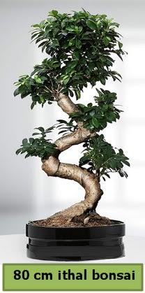 80 cm özel saksıda bonsai bitkisi  Kütahya 14 şubat sevgililer günü çiçek