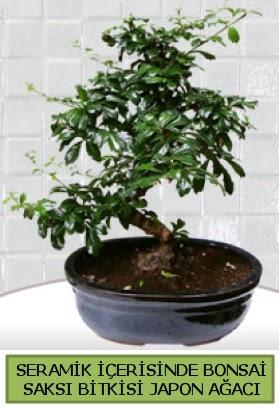 Seramik vazoda bonsai japon ağacı bitkisi  Kütahya kaliteli taze ve ucuz çiçekler
