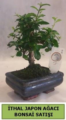 İthal japon ağacı bonsai bitkisi satışı  Kütahya 14 şubat sevgililer günü çiçek