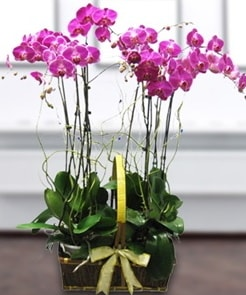 7 dallı mor lila orkide  Kütahya cicek , cicekci