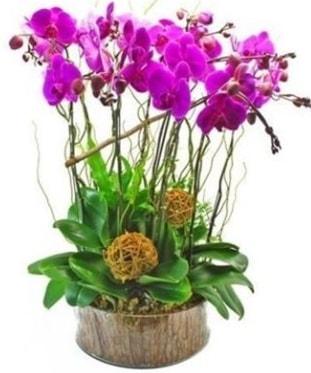 Ahşap kütükte lila mor orkide 8 li  Kütahya güvenli kaliteli hızlı çiçek