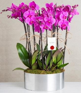 11 dallı mor orkide metal vazoda  Kütahya cicek , cicekci