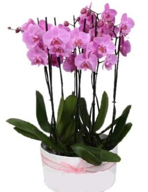 Beyaz seramik içerisinde 7 dallı mor orkide  Kütahya 14 şubat sevgililer günü çiçek