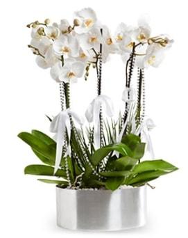 Beş dallı metal saksıda beyaz orkide  Kütahya cicekciler , cicek siparisi