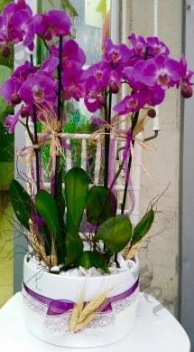 Seramik vazoda 4 dallı mor lila orkide  Kütahya İnternetten çiçek siparişi