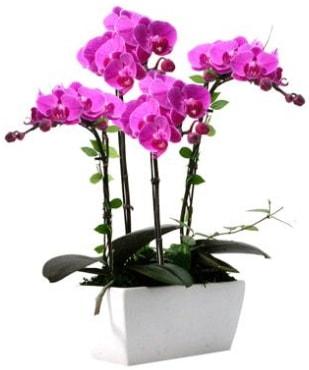 Seramik vazo içerisinde 4 dallı mor orkide  Kütahya anneler günü çiçek yolla