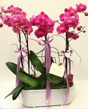 Beyaz seramik içerisinde 4 dallı orkide  Kütahya çiçek online çiçek siparişi