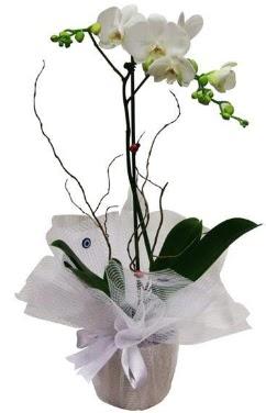 Tek dallı beyaz orkide  Kütahya çiçek gönderme sitemiz güvenlidir