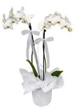 2 dallı beyaz orkide  Kütahya internetten çiçek satışı