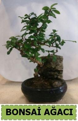 Bonsai ağacı japon ağacı satışı  Kütahya çiçek servisi , çiçekçi adresleri