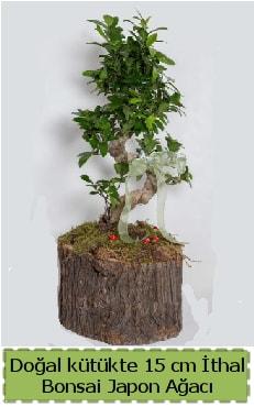 Doğal kütükte İthal bonsai japon ağacı  Kütahya uluslararası çiçek gönderme