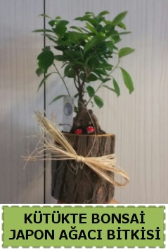 Kütük içerisinde doğal bonsai ağacı  Kütahya 14 şubat sevgililer günü çiçek