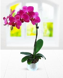 Tek dallı mor orkide  Kütahya anneler günü çiçek yolla