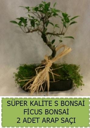 Ficus S Bonsai ve arap saçı  Kütahya 14 şubat sevgililer günü çiçek
