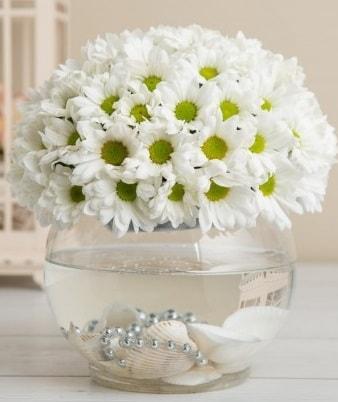 Fanusta beyaz Papatya  Kütahya anneler günü çiçek yolla