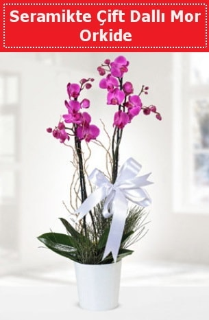Seramikte Çift Dallı Mor Orkide  Kütahya çiçek satışı